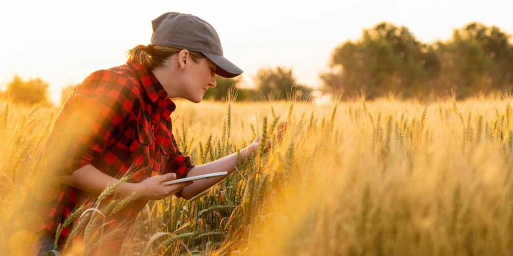 A woman farmer examines the field of cereals and sends data via a tablet